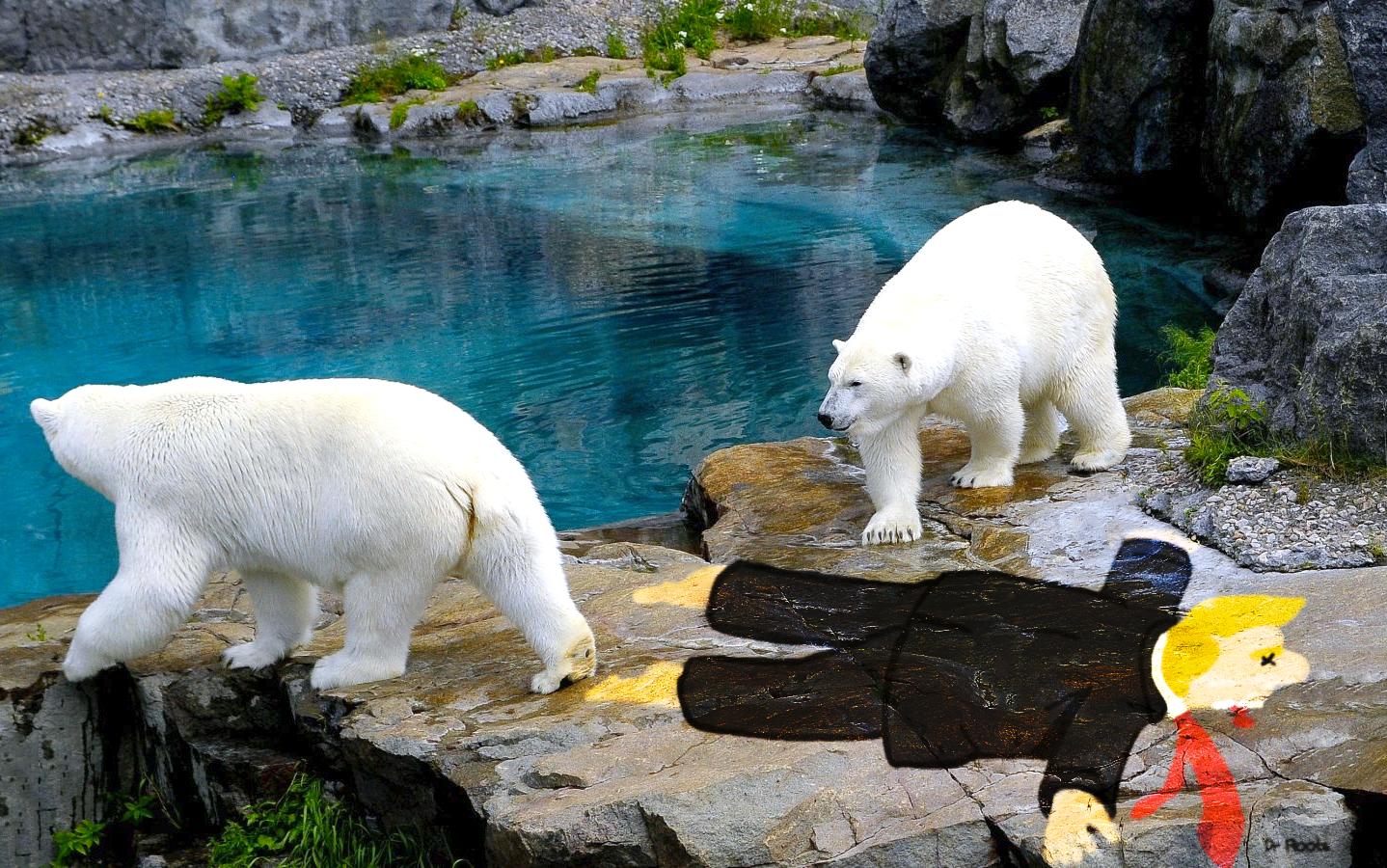 Nouvelle déco chez les Ours
